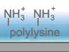 high density polylysine for cell adhesion and DNA attachment